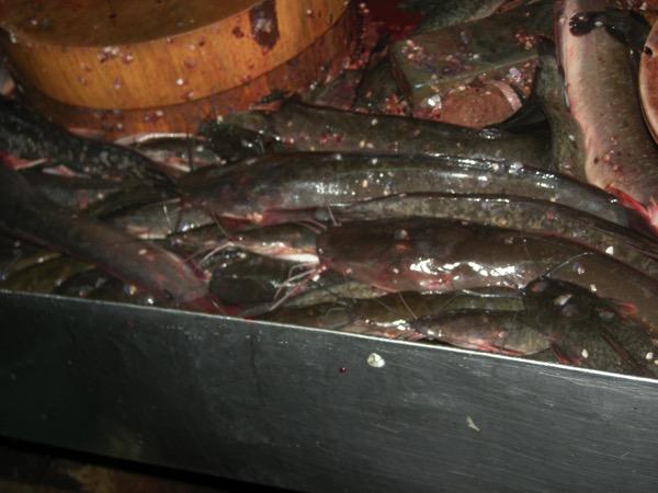 バンコク市場の魚