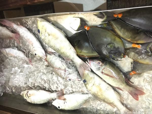ミクロネシアの魚