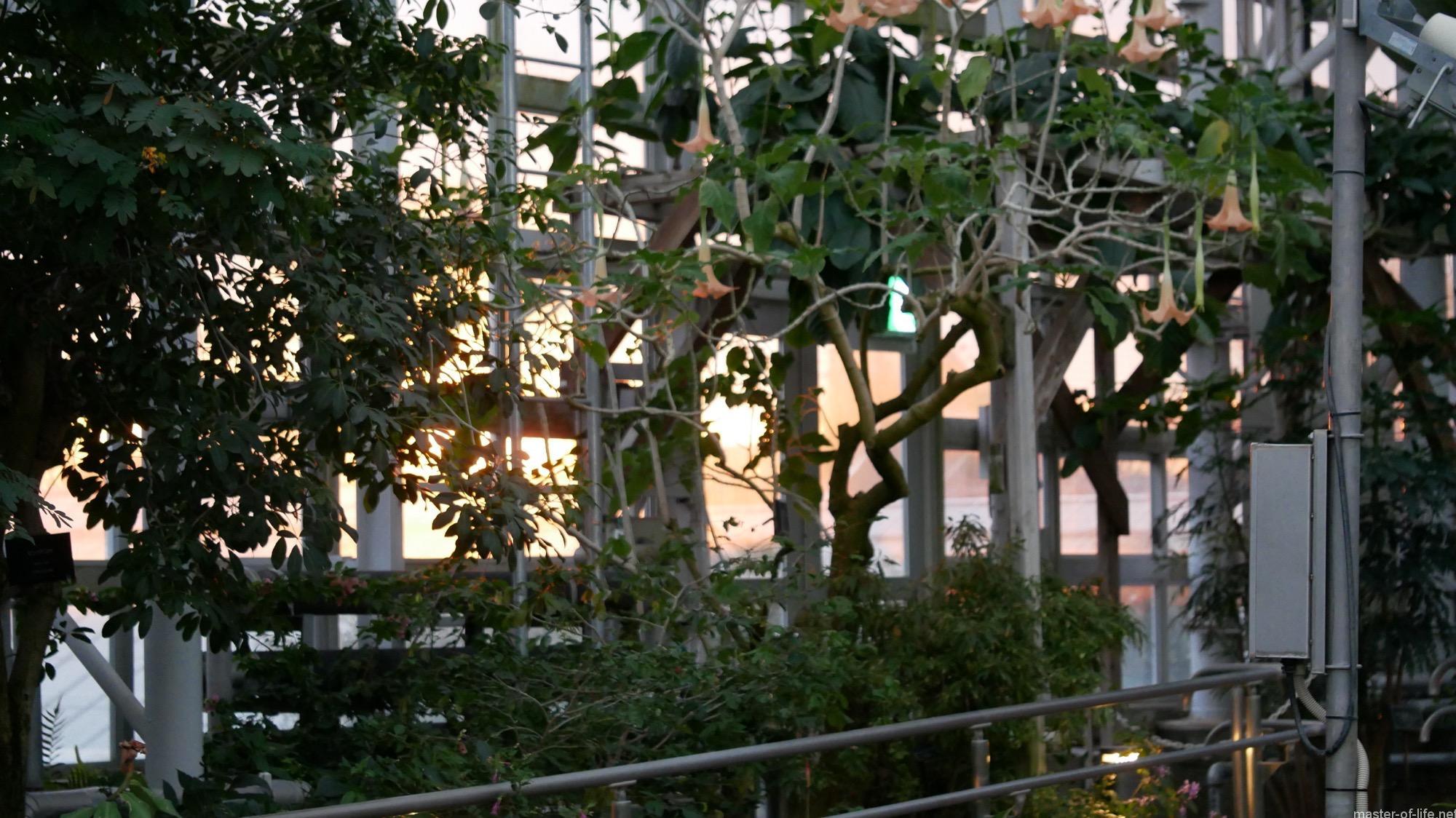 神代植物公園大温室